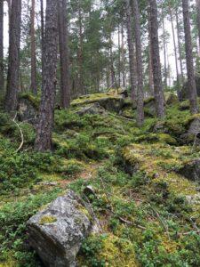Wald Winkelberg Ötztal
