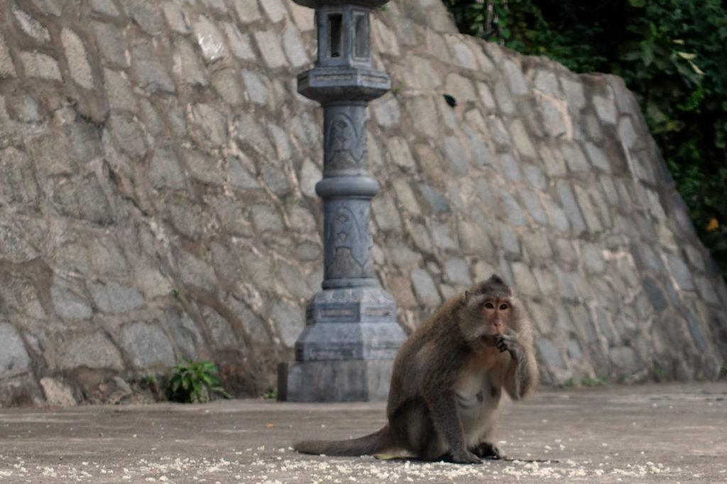 Ein Makake beim Tempel auf Con Son. (Con Dao), Vietnam